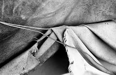 Μice camp (Argyro Poursanidou) Tags: abstract fabric decay mouse mice camp monochrome blackandwhite lines curves