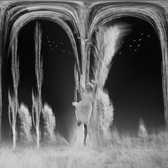 let's be free (old&timer) Tags: background infrared blackwhite filtereffect composite surreal song4u oldtimer imagery digitalart laszlolocsei