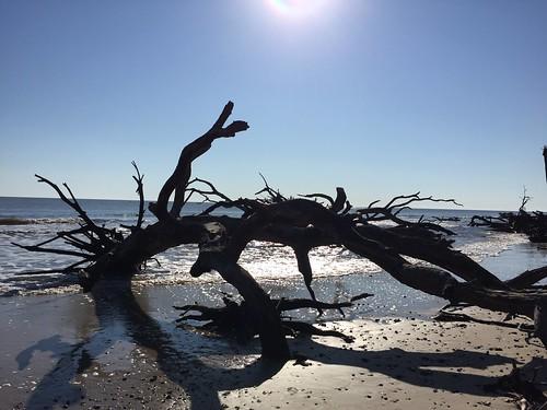 Jeckyll Island Driftwood Beach