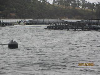 Salmon nurseries, River Derwent, Tasmania