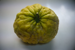 鬼柚子 (kasa51) Tags: citron fruit big 柚子 winter 鬼柚子