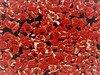 Red Sea of Sadness (petermorton42) Tags: seaofsadness remembrance poppyfield