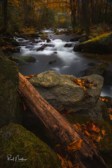 Last color of autumn at Jones Gap State Park (Reid Northrup) Tags: water rock rocks river wood tree trees forest stream creek autumn fall nature landscape nikon rrs longexposure cascade cascades southcarolina jonesgapstatepark moss