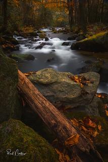Last color of autumn at Jones Gap State Park