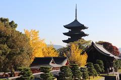 Autumn in Kyoto   ---Yellow ginkgo with pagoda--- (Teruhide Tomori) Tags: japan japon kyoto toji temple architecture construction pagoda garden autumn yellow ginkgo 京都 日本 秋 イチョウ 五重塔 寺院 教王護国寺 happyplanet asiafavorites