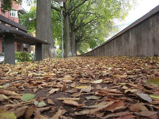 all_the_leaves_are_brown