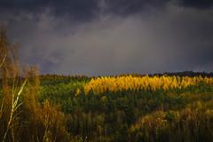 Herbstfarben (uschmidt2283) Tags: a7r farben herbst landschaften licht macro sonne