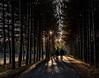 evening light (marianna_a.) Tags: victoriaville pine trees light shadow men couple walking evening forest p1600695 mariannaarmata