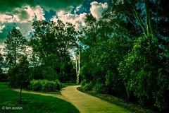EVENING in the PARK (len.austin) Tags: australia australianplants brisbane evening landscape outdoor park queensland