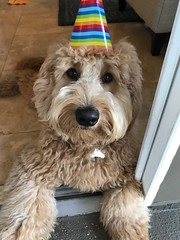 Kizzie's handsome Oliver is 1!