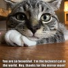The luckiest cat in the world (Chikkenburger) Tags: icanhas animals cats kitties lolcats lol funny cheezburger chikkenburger