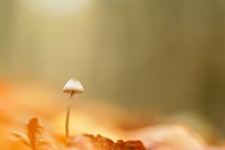 IMG_9520 - parmi les feuilles....