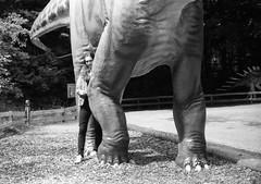 . (skinner08) Tags: canon ftb analog kleinbild agfa apx100 adonal 150 10min canoscan 8800f selfdeveloped schwarz weis black white dinopark wildlife