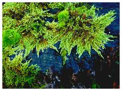 DSC_1889 (FMAG) Tags: 2017 żabieniec zalesie jesien