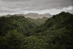 It's a jungle out there (CNorth2) Tags: mountains trees cloudy landscape nature outdoor hiking hawaii oahu koolau