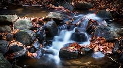 Abriendo camino (candi...) Tags: rio riera agua corriente piedras rocas nat montseny sonya77 hojas hojassecas efectoseda airelibre