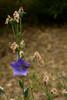 DSC_0397 (Hachimaki123) Tags: 東京 日本 tokyo japan chiyoda 千代田区 千代田 皇居 tokyoimperialpalace imperialpalace palacioimperial kōkyo imperialpalaceeastgardens 皇居東御苑 kōkyohigashigyoen plant planta flor flower 植物 花