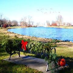 Welcome to December (humbletree) Tags: madisonwisconsin tenneypark lagoon bench blueskies bluewaters geese