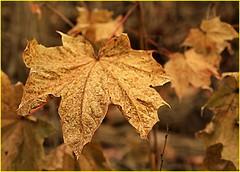 171202 Pomona Mills Park (4) (Aben on the Move) Tags: pomonamillspark toronto thornhill ontario canada park nature