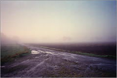 Novembermorgen IV (Ulla M.) Tags: dorsten feld november nebel fog bäume trees olympusxa selfdeveloped selbstentwickelt 35mm kleinbild reflectaproscan10t umphotoart rangefinder analog analogue