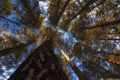 How tiny we are (Priscila de Cássia) Tags: yosemitenationalpark yosemiteconnect yosemite california naturephotography sky clouds tree travel nikon nikond700 prisciladecassia