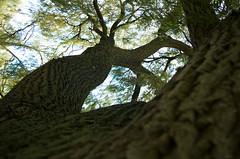 Arm (Atreides59) Tags: nord lille villeneuve ascq villeneuvedascq arbre tree nature jaune yellow vert green up pentax k30 k 30 pentaxart atreides atreides59 cedriclafrance