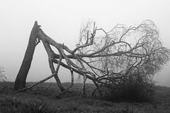 Tree (0287) (Jorge Belim) Tags: flora pb 70200 canoneos7d