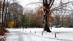 lede vlaanderen belgië bel natuur herfst ベルギー... (Photo: Johnny Cooman on Flickr)