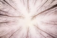 Niebla (arapaci67) Tags: niebla otoño tokina 12mm canon jaén villanuevadelareina españa andalucía lineas
