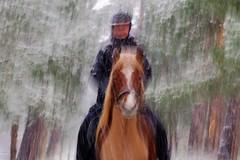 Snow painting (peeteninge) Tags: snow horse horsebackriding animal girl forest wood trees snowing painting paard sneeuw sneeuwen meisje paardrijden bos bomen fujifilmxt2 fujifilm