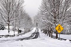 Haywood County Snow (esywlkr) Tags: road rural nc wnc haywoodcounty northcarolina weather snow trees winter