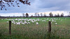 Niederrhein impression (rotraud_71) Tags: germany nordrheinwestfalen kempen gutheimendahl niederrhein gänse geese sky meadow fence windturbines clouds