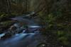 reward verses risk... (Alvin Harp) Tags: canyonville oregon canyoncreek december 2017 sonyilce7rm2 leefilters longexposure fe2470mmf28gm ravine stream creek le naturecalls nature trees alvinharp