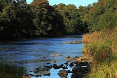 Upstream from Lower Hodder in Summer