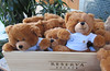 Bear party at the fitness center (Monceau) Tags: bear toy stuffedtoy bears cute 16haveapartywithyourbear 117picturesin2017