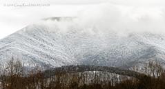 Blue Ridge Mountains in the Snow II (Greg Reed 54) Tags: virginia nelsoncounty devilsbackbonebrewery snow winter tree trees blueridgemountains beechgrove