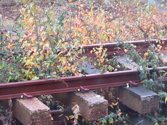 Overgrown Used Rail (Gary Chatterton 4 million Views) Tags: railway railroad overgrown nature weeds concrete sleepers rust oxidisation abandoned track selbyrailwaystation selby northyorkshire canonpowershot photography flickr explore amateur