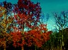 A Jolly Autumn sighting today (Lynn English) Tags: forest trees autumn colors leaves texture bej