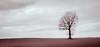 Tree.earthed (Beppe Rijs) Tags: deutschland germany schleswigholstein schlei wolken wolkendecke landschaft landscape natur nature field feld gras baum tree horizont horizon clouds line linie rural ländlich acker himmel sky wood holz