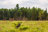 Cloquet Valley State Forest, Minnesota (Tony Webster) Tags: carroltrucktrail cloquetvalley minnesota northernminnesota forest stateforest duluth unitedstates us