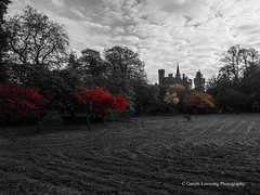 Bute Park, Cardiff 2017 11 15 #5 (Gareth Lovering Photography 5,000,061) Tags: cardiff wales millennium centre bute park bay roath olympus omdem10ii 14150mm garethloveringphotography