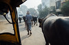 AGRA STREETS, Agra / India 2015 (monoauge) Tags: d7000 dslr nikon nikond7000 agra agrastreets street streetshot tuktuk streetphotography people animals india uttarpradesh ox cow farmer urban typicallyindia travel travelshot travelphotography
