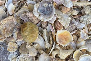 Shells and a Pebble