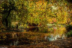 Otoño.- (Charo R.) Tags: naturaleza otoño hojas lago aire libre canon