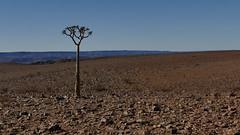 klein und allein (marionkaminski) Tags: namibia afrika africa landscape paysage paisaje baum tree arbre arbol köcherbaum panasonic lumixfz1000