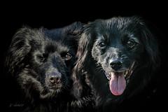 Victor & Woeke (K.Verhulst) Tags: markiesje hond dog pet huisdier woeke victor coth5 sunrays5