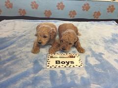 11-26 Roxie Boys_Pic 1