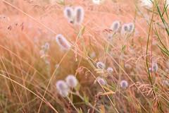 Ах, лето! (Alex-Bell) Tags: alexbell30 alexey belyaev russia voronezh fiower summer light herb nature алексей беляев цветы природа лето солнце россия страна город воронеж