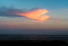 phoenix  #3216 (lynnb's snaps) Tags: 2014 digital v1 coast cloud sunset colour horizon sydney australia nikon1v1 phoenix