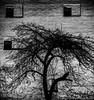 Castle, Ingolstadt, Germany (fritz bln) Tags: ingolstadt castle baum tree